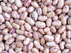 Pinto Beans Nutrition Facts And Health Benefits In Telugu