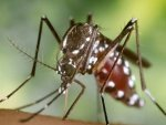 Malaria In Kids Causes Symptoms Diagnosis Treatment And Prevention In Telugu