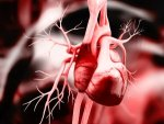 Covid 19 And The Heart Researchers Find The Virus Can Infect Kill Heart Cells And Muscles