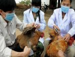 China Reports First Human Case Of H10n3 Bird Flu All You Need To Know In Telugu
