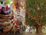 How To Worship Peepal Tree To Get Blessings In Telugu