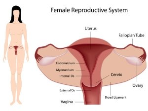 Lifestyle Changes To Improve Reproductive Health In Telugu