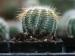 ఈ మొక్కలు ఇంట్లో ఉంటే దరిద్రం పట్టిపీడుస్తుంది, వాస్తుశాస్త్రం ప్రకారం ఇంట్లోఉండకూడని మొక్కలు,చెట్లు